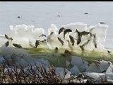 Chuyện có thật - Đàn cá bị đóng băng giữa không trung vì thời tiết quá khắc nghiệt