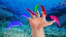 Sea Animals Finger Family Nursery Rhymes | Killer Whale Shark & Dolphin Finger Family Song