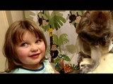 Little Girl Helps Groom Her Pet Monkey