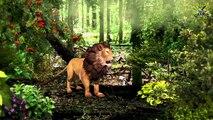 Lion Bear Finger Family Nursery Rhymes   Animal Cartoons Funny Toddler Kids Songs For Kids