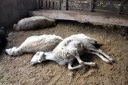Yozgat'ta Şüpheli Hayvan Ölümleri