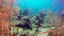 World's Best Diving: Exploring Dominica's Beautiful Coral Reefs