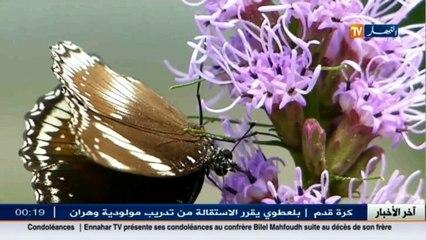 الفراشات...أجمل الحشرات مهددة بالزوال لعدة أسباب