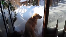 Funny Cats in Snow - Try Not to Laugh Chall asd