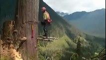 Pria nekat,nebang pohon sama resiko nya sama-sama besar...