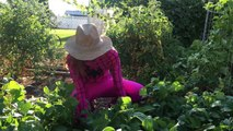 Pregnant Pink Spidergirl Watermelon W Doctor Spiderman Fun Superhero Kids In Real Life In