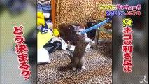 橋から落ちた子ネコの奇跡の物語…ネコ愛あふれるネコの日SP!! 2/22(水)『生き物にサンキュー!!』【TBS】
