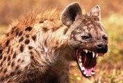 Top ataque de animais selvagens #11, Animais selvagens atacando, Animals, Confrontos animais, Serpentes atacando animais