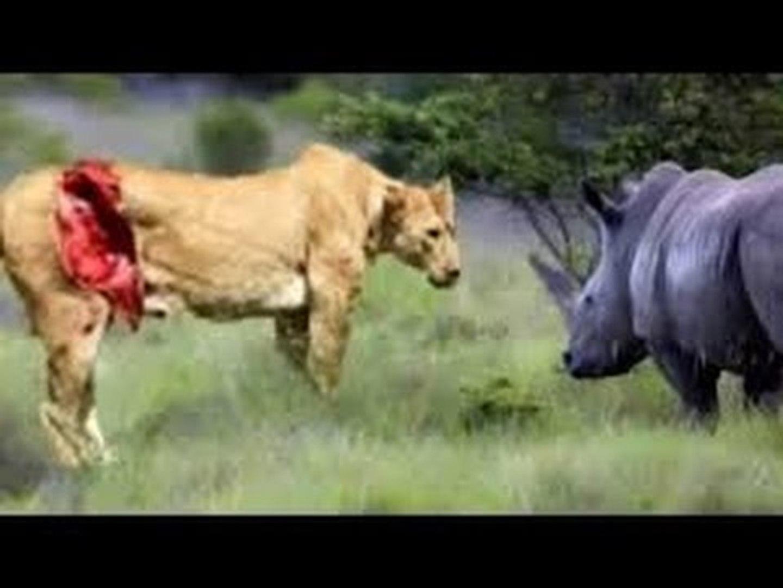 TOP 10 ANIMALS TEAMWORK -When Animals attack - Power Teamwork of Wild Animals