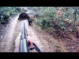 HUNTING for WILD BOAR! Real Hunter's life! Real moments wild boar hunting!
