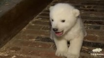 Polar Bear Cub Dies At Berlin Zoo