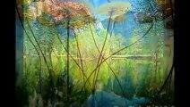 Những hình ảnh thiên nhiên đẹp nhất trên thế giới