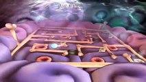 Locos de la Invasión de los Conejos |1 serie| Locos conejos 2 parte del juego como de dibujos animados