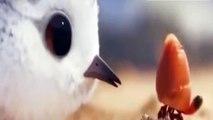 Piper Disney Pixar  That was so cute Bird