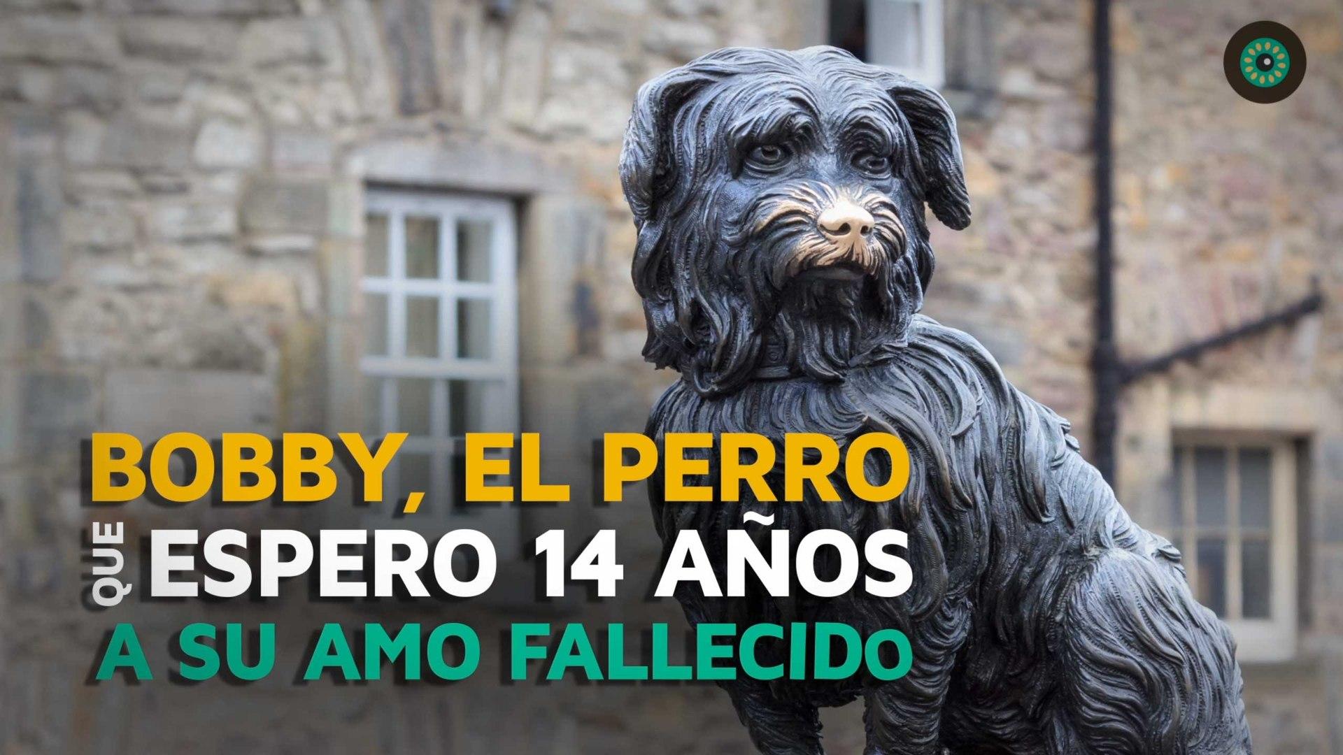 Bobby, el perro que esperó 14 años a su amo fallecido