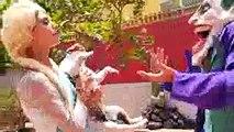 Человек-паук и замороженные elsa собака против Круэлла! Щенок похитил паука ж Анна, Халк, Firem Джокер