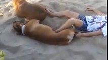 Ce chien donne une bonne correction à une jeune fille qui l'embêtait avec des coups de pied pendant son sommeil