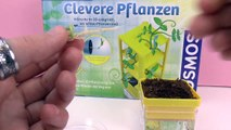 Clever Plants from Kosmos | Peas are planted – What happens next? Attempt 2 | Update 4