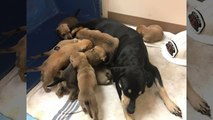 Firefighters Save 9 Puppies, Some With Minor Burns, From House Fire