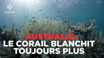 Australie : la Grande Barrière de corail blanchit toujours plus