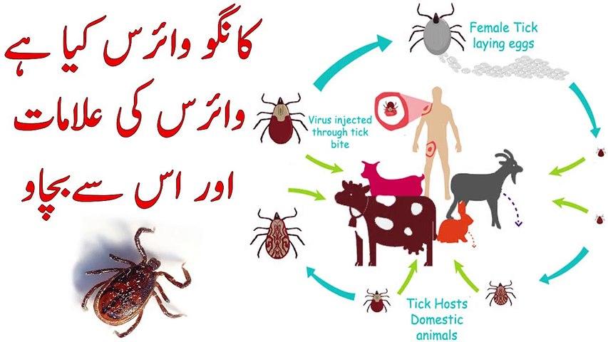 Congo Virus Details in Urdu    Congo Virus kya hai, Iss ki Alamat Aur Bachao