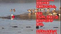 凍った湖の穴に愛犬が落ちてしまった。その時女性は信じられない行動に出た。