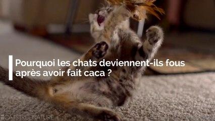 Pourquoi les chats deviennent-ils fous après avoir fait caca ?