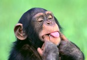 Top animais selvagens #49d, Animais selvagens atacando, Animals, Confrontos animais, Serpentes atacando animais e humanos, Lince, Piton birmanesa, Wild life, Reino animal, Animals, animais em extinção, animais marinhos, vida animal, filme -18ans, lion vs
