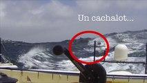 OFNI en pleine mer pour Kito de Pavant / Vendée Globe