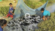 Amazing Net Fishing - 3 Children Catch a Lot Of Fish in Canal - Khmer Cast Net Fishing 2016
