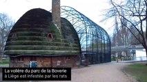 Les rats de la volière du parc de la Boverie de Liège sont à nouveau de sortie