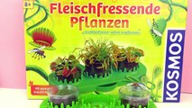 Growing flesh-eating plants - Venus Flytrap and Sundew Seeds - Demo