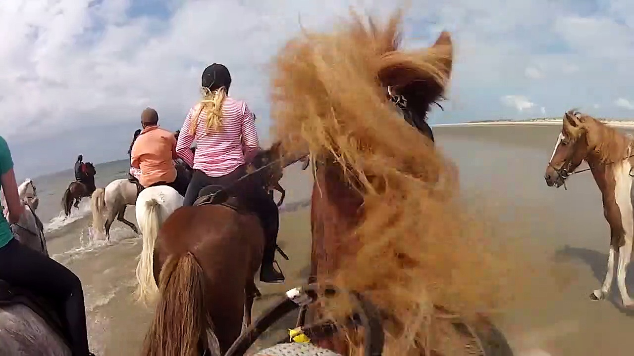 Horse Riding – Icelandic Horses for  dsvse