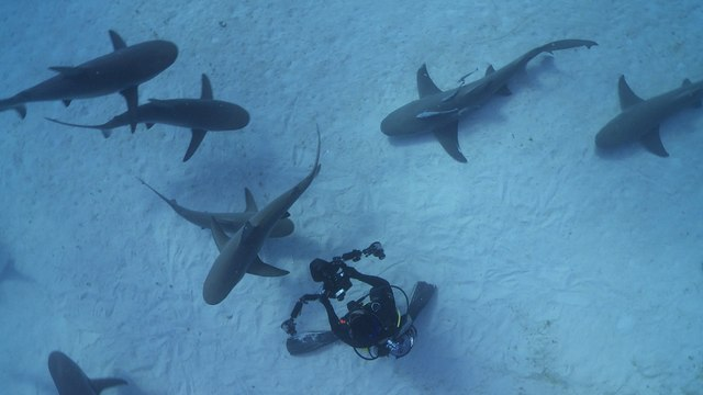 Swimming With Sharks Might Not Be A Bad Thing