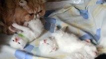 mes bébés trois semaines avec Mickey un beau bébé de 10 mois et leur maman Joéline
