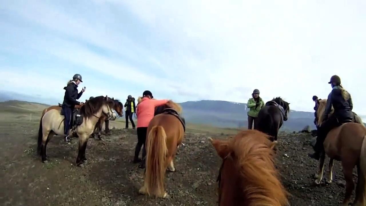 Horse Riding – Icelandic Horses for