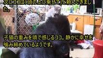 【感動】ネコが起こした奇跡 その出会いは自閉症を抱える女の子の世界を変えた