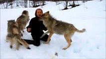 Une belle histoire d'amitié entre une femme et des loups sauvages !