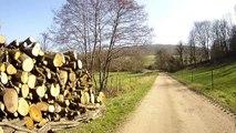 Dans nos Ardennes 2 - Les bois de Néparcy