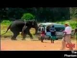un éléphant qui perd son sang froid !!!