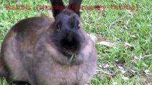 Farm Animals and Their Sounds for Kids donkey dog hen chicks calf horse rooster sheep rabbit turkey pig goose geese duck