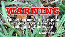 Spider Wasp Kills Giant Spider Aliens In Nature Scary Spider Control-n2