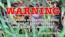 Spider Wasp Kills Giant Spider Aliens In Nature Scary Spider Control-n2A1