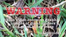 Spider Wasp Kills Giant Spider Aliens In Nature Scary Spider Control-n2A1YsFA