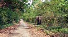 elephant || elephant video || wild ||wild animals ||wildlife|| jim corbett national park || animals || jungle|| safari