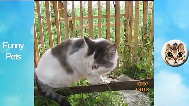 Funny Pets Funny, Clever Cats, Best Pets Compilation, Dog Tricks, Pet Animals Agility