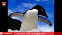 penguins Wildlife in adventure || 12 million penguins in Antarctica || 5 species of penguins
