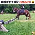 Il en fait pas un peu trop le cheval là C'est juste un petit obstacle
