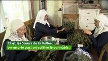 En Californie, ces fausses nonnes cultivent du vrai cannabis