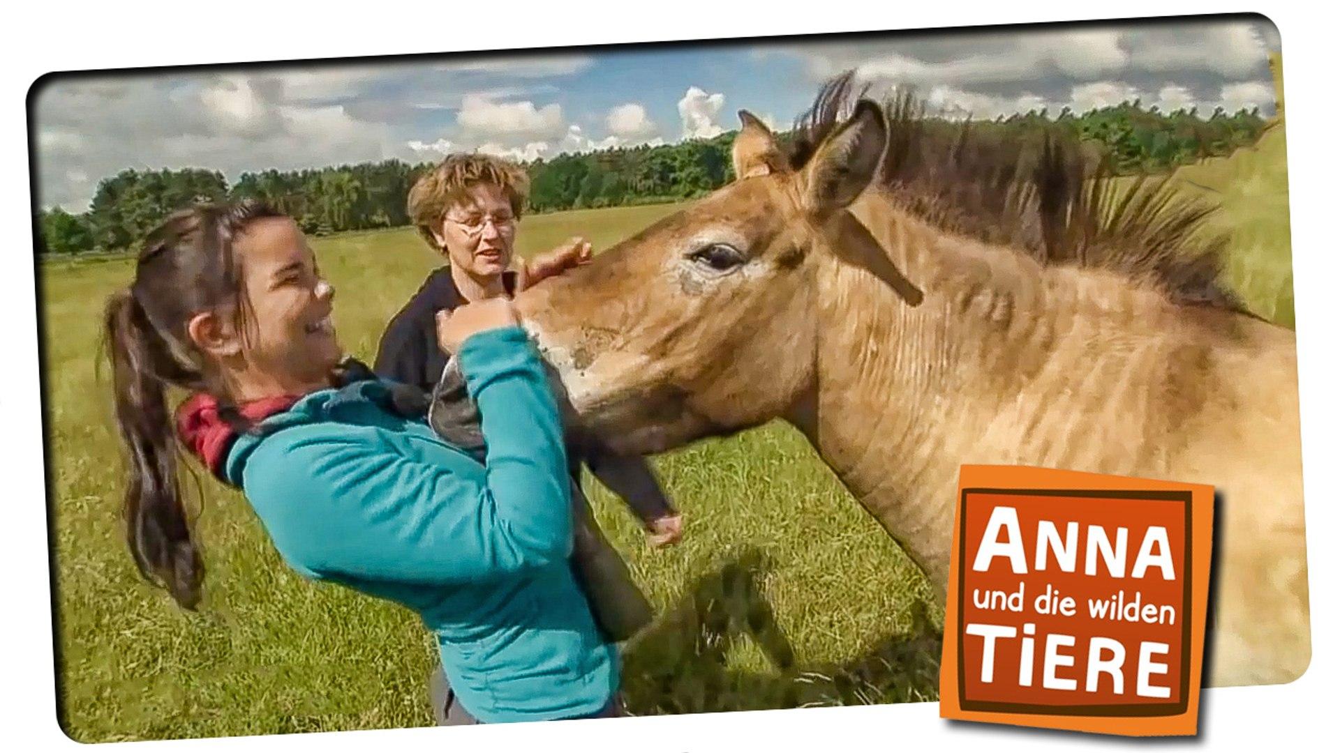 Anna Und Die Wilden Tiere Folge 1 Wie Wild Ist Das Wildpferd